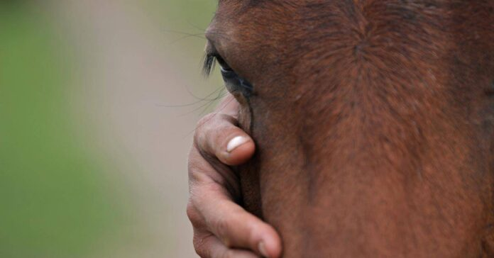 end-of-life decisions. a hand holding horse's head. Showing horse's eye. horse euthanasia. end-of-life decisions