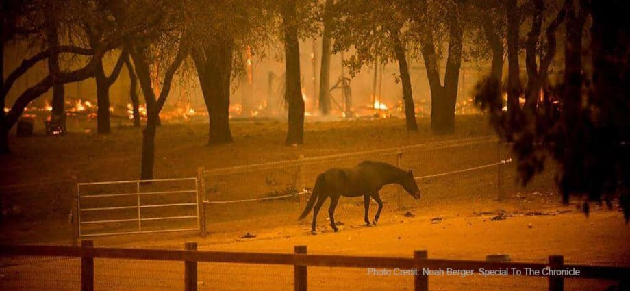 Risk Management Plan, Fires, Image of horse in paddock while fire rages in the backgroundPhoto Credit: Noah Berger, Special To The Chronicle