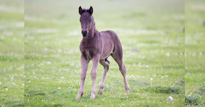 Common problems of the equine penis and sheath