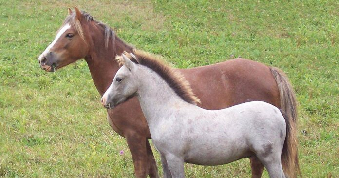 Managing horses in groups, weaning