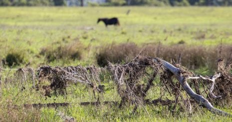 The Cycle of Disaster Resilience, horse standing in paddock after a flood. Fence covered in flood deris