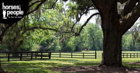 Horse property. property improvements for all budgets