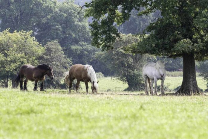 Holistic Management for Horse Properties