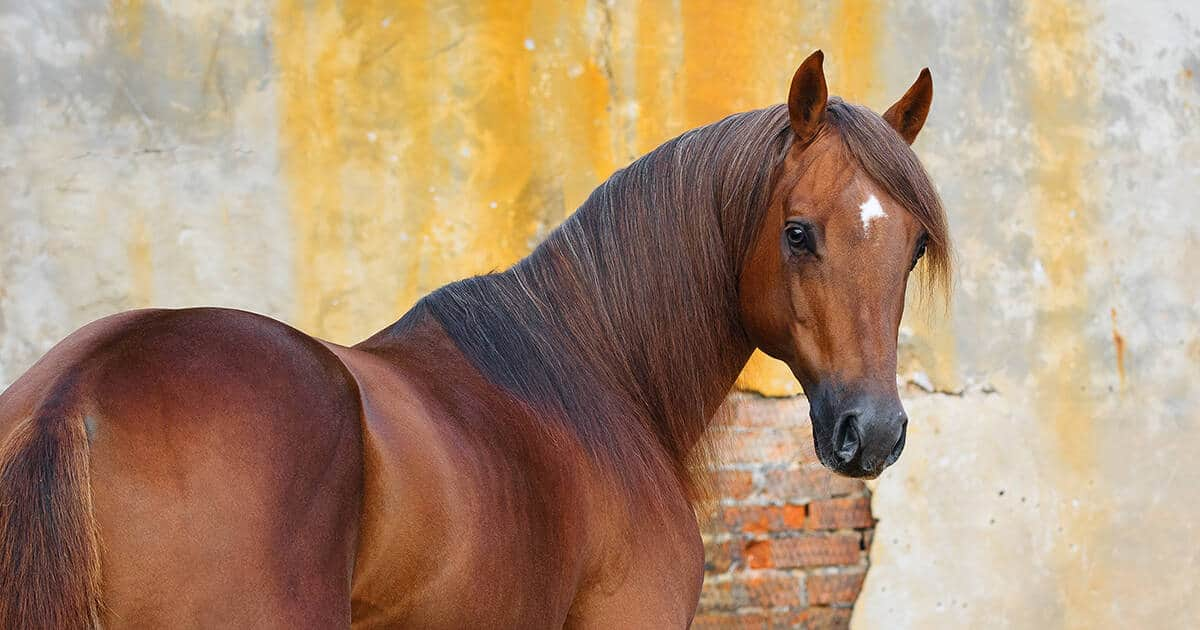 Horse standing in front of wall. Monitoring your horse's condition