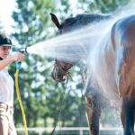 Tips for Exercising Horses Safely in Summer. Hosing horses, washing horses