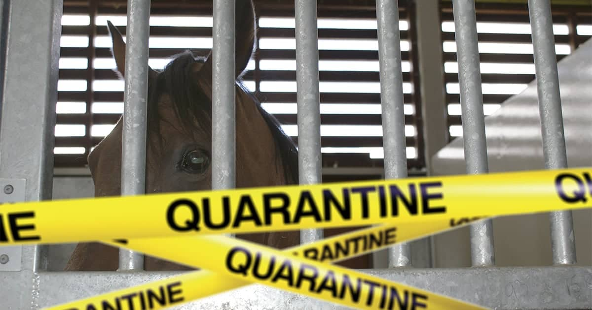 Horse in stable, behind bars with quarantine tape in foreground. Biosecurity. Equine Herpes Virus