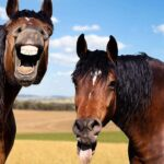 Two horses laughing. You're anthropomorphising