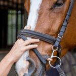 A noseband that allows two adult fingers to fit between the nasal bones and the strap