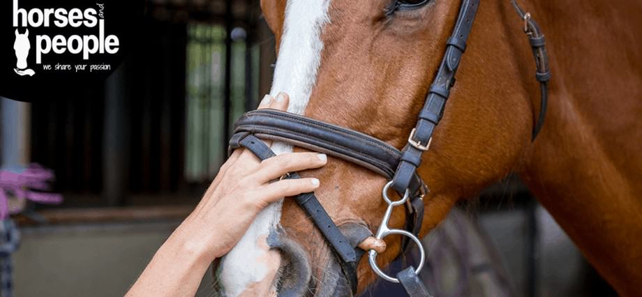 A noseband that allows two adult fingers to fit between the nasal bones and the strap. ISES Position Statement on use of Nosebands