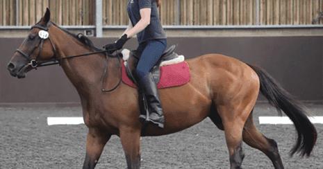 Bay horse being ridden. Ridden-horse ethogram