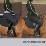 Comparing rider weight. Horse-rider weight.