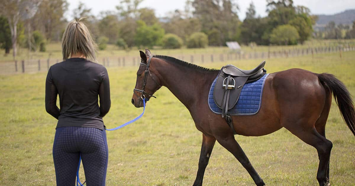 woman lungeing saddled horse. Biosecurity Entity Registration Portal
