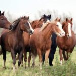 Horse herd standing in paddock. Positive change, enrichment