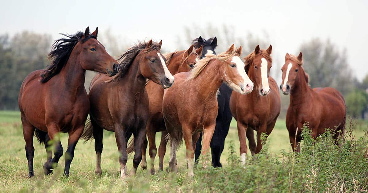 Horse herd standing in paddock. Positive change, enrichment. Social media reaction to horse welfare