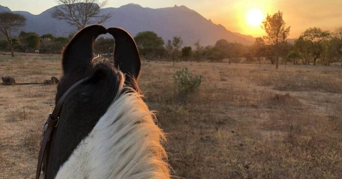 Indian sunset viewed between the ears of a Marwhari horse. Kate Fenner, giving back to horses