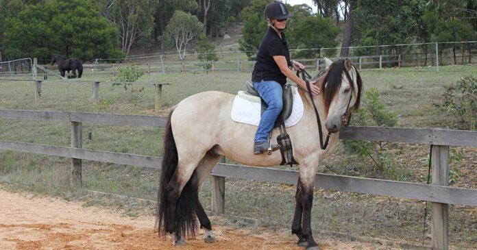 Kate Fenner riding a buckskin horse. Train your own horse.