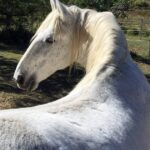Grey horse without rug. When to rug your horse