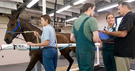 Horse on treadmill. Diagnosing Mild Equine Asthma