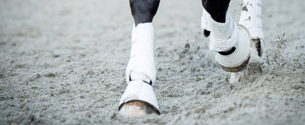 Horse joints, ligaments, tendons, soundness, legboots, joint health