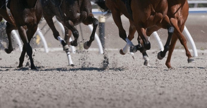 Race horse legs on US race track. Race-day Lasix reform