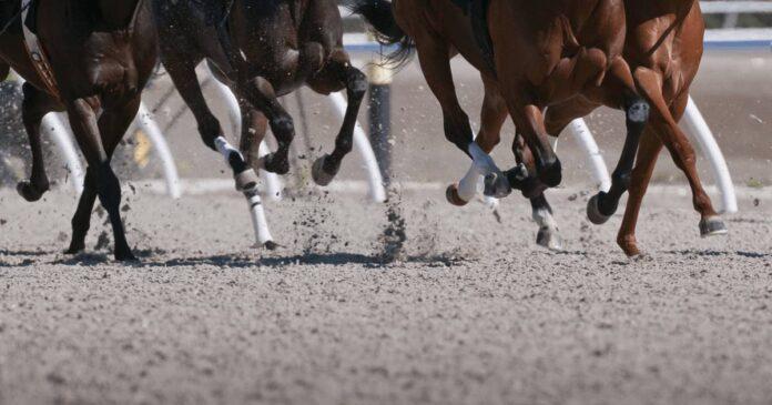 Race horse legs on US race track. Race-day Lasix reform