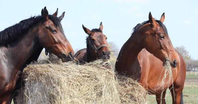 Round Bale, Feed balancers, Feeding roughage
