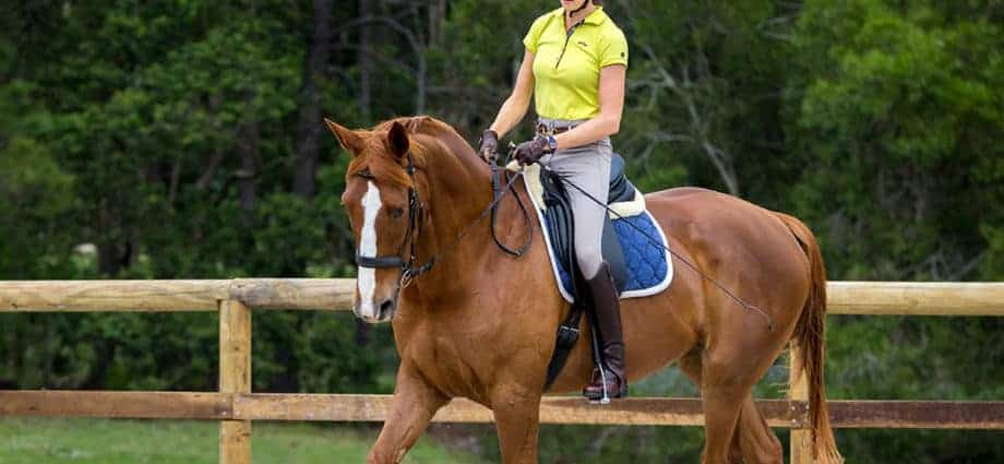 Woman riding chestnut horse. The Engagement Zone