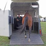 Training your horse to load - easily! Loading a horse onto a horse float easily. Stress free trailer loading