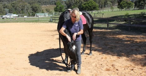 Kate Fenner teaching a young horse to lower it's head. Head Down Lesson