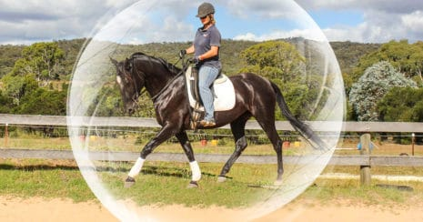 Kate Fenner riding her horse within the engagement bubble. The confident horse. Riding confidence and online horse training