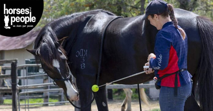 Woman using target training to perform core strength stretches for horses.