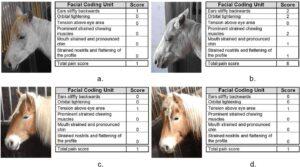 Excerpt horse grimace scale