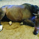 Horse with colic