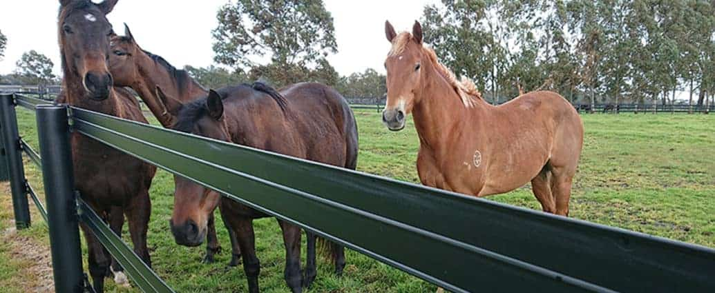 Horserail fence with two three horses. Safe fencing for horses.
