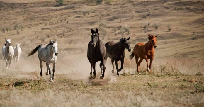 Managing and Feeding Horses during drought
