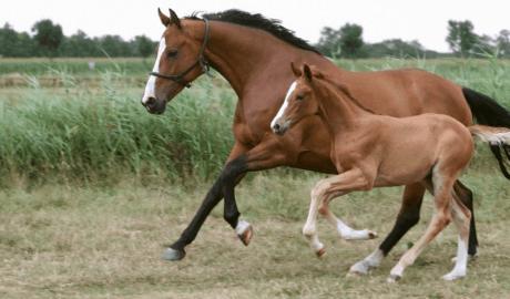 Breeding a foal