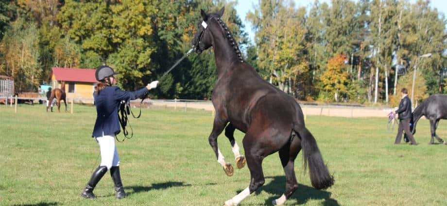 Rearing horse being led. Why does my horse rear?
