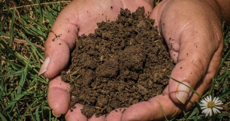 It's all about soil. Healthy soil yields healthy pasture. Facts about soil