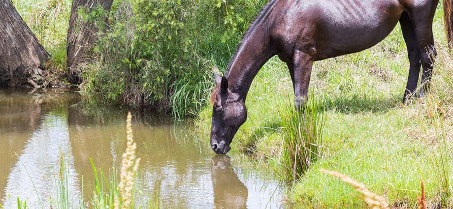 Managing water. Ecosystem processes, holistic management for horse properties