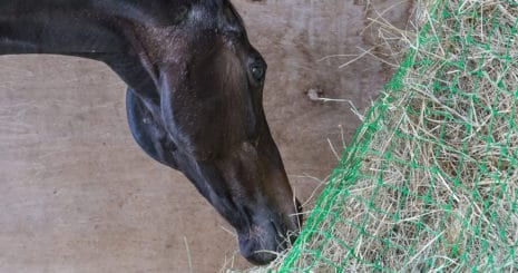 Choosing hay for your horse