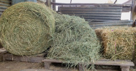 Choosing roughage when selecting hay. Quality roughage