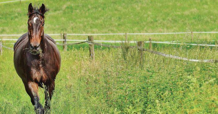 Managing pastures for soil health. Pasture management