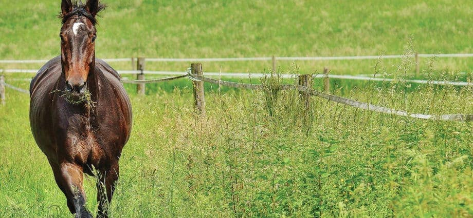 Managing pastures for soil health. Pasture management
