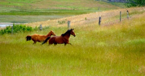 To create healthy pastures and adequate food for our horses and for ourselves, we must ensure that our decisions are socially and environmentally responsible