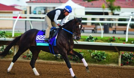 tongue tie horse race