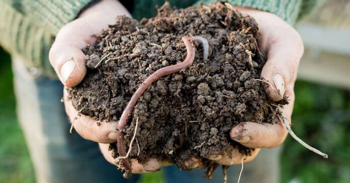 The soil food web