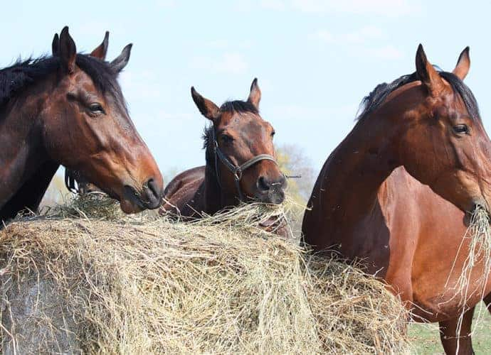 forage friends freedom are the things horses values. Quality of life