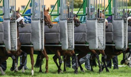 horseracing starting gates