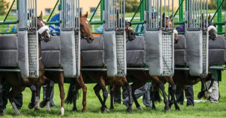 horse race starting gate