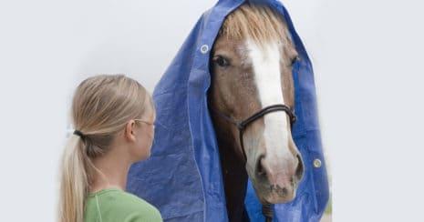 de-spook horse training